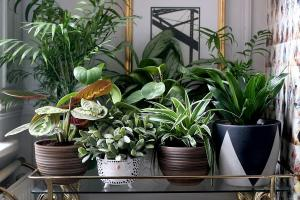 6 stylish and original way to decorate your house plants