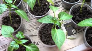 7 main rules of strong and friendly seedlings