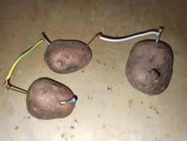 Electricity from potatoes - conduct a simple experiment