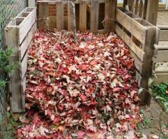 Where you can usefully use fallen leaves in autumn.