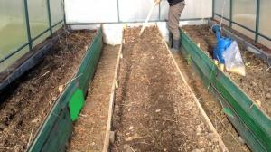 Mandatory autumn in the greenhouse soil treatment against infections and fungi (harmless way).