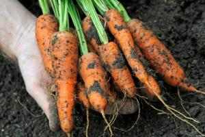 What can be planted vegetables in the winter