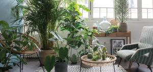 Which of indoor plants will be a perfect look in an interior hallway, bedroom or kitchen. 7 design ideas