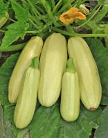 Ways to store winter squash up