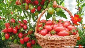 Restore the soil after harvest tomatoes