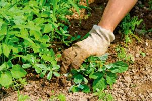 We fight and win: how to get rid of weeds
