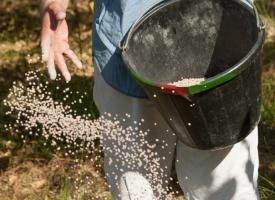 What fertilizer must always be applied to the soil in the fall