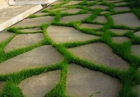 How to destroy the grass in the garden path without pesticides.