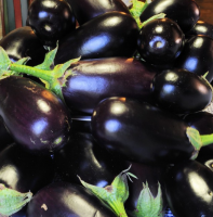 Season workpieces proceeds. Prepare eggplant amazing taste cell in winter (otherwise lecho)