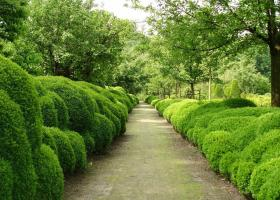5 best plants to create hedges that protect against dust