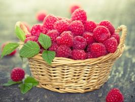 Raspberries will be more! 5 feedings that will increase productivity by 2-3 times