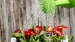 How can water the plants for fast growth and profuse flowering